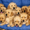 3_puppies.jpg